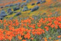 在羚羊谷的野花 免版税库存图片