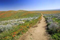 在羚羊谷的野花 免版税库存照片