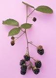 在群的黑莓 库存图片
