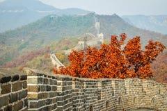 在老中国长城上的秋叶 免版税库存照片