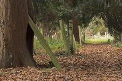 在老公墓南安普敦共同性的一条叶茂盛道路 仍然和一个多云早晨 免版税库存照片