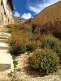 在老具体台阶的红色和橙色花 库存图片