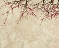 在老古色古香的葡萄酒纸的李子开花 库存图片