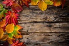 在老土气木背景的秋叶 免版税库存图片