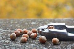 在老土气桌上的榛子用坚果薄脆饼干 免版税库存图片