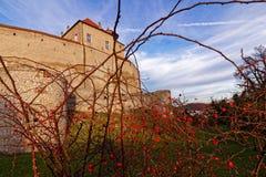 在老城堡秋天风景的狗玫瑰灌木 免版税图库摄影