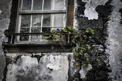 在老墙壁上的窗口有一朵蓝色花的 库存图片
