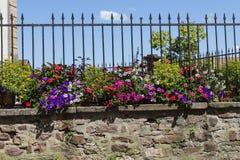 在老墙壁后的美丽的五颜六色的summerflora 库存照片