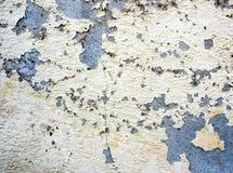在老墙壁和死者小块上的破裂的颜色烘干了常春藤 免版税库存照片