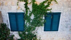 在老墙壁的两个窗口有闭合的蓝色快门和绿色常春藤的 库存图片
