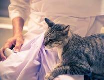在老妇人的容忍的猫 库存照片