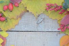 在老委员会五颜六色的秋叶和莓果野玫瑰果和伏牛花 库存图片