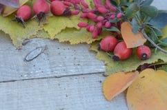 在老委员会五颜六色的秋叶和莓果野玫瑰果和伏牛花 免版税库存图片