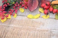 在老委员会五颜六色的秋叶和莓果野玫瑰果和伏牛花 库存照片