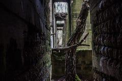 在老工厂废墟的树 免版税图库摄影