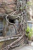 在老工厂房子墙壁上的根在redtory创造性的庭院,广州,瓷里 免版税库存图片
