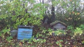 在老庭院和秋天spiderweb的遗弃蜂箱 股票录像
