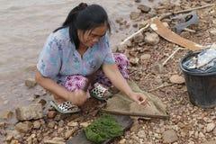 在老挝人PDR的淡水海藻 免版税库存图片