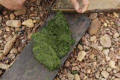 在老挝人PDR的淡水海藻 库存照片