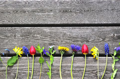 在老木板条的五颜六色的春天花 免版税库存图片