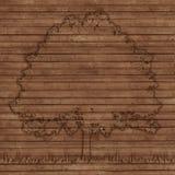 在老木板条背景的等高树 库存照片