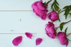 在老木板的紫色牡丹 安置文本 顶视图 库存照片