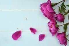 在老木板的紫色牡丹 安置文本 顶视图 免版税库存照片
