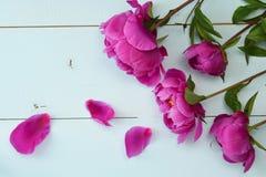在老木板的紫色牡丹 安置文本 顶视图 免版税库存图片