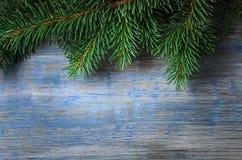 在老木板背景的绿色云杉的树  免版税图库摄影