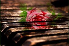 在老木板,情人节的玫瑰 免版税库存图片