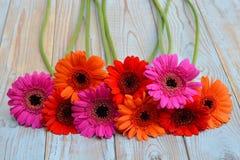 在老木架子背景的五颜六色的gerber雏菊与空的拷贝空间 库存照片