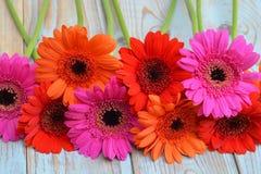 在老木架子背景的五颜六色的gerber雏菊与空的拷贝空间 免版税库存图片