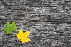 在老木桌上的下落的槭树叶子 秋天背景特写镜头上色常春藤叶子橙红 葡萄酒概念 库存照片