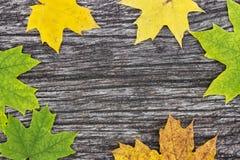 在老木桌上的下落的槭树叶子 秋天背景特写镜头上色常春藤叶子橙红 免版税库存图片