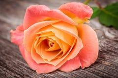 在老木桌上的桃红色玫瑰 库存图片