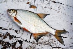 在老木桌上的鱼 免版税库存照片