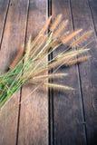 在老木的草 免版税库存图片