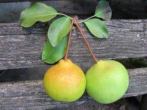 在老木篱芭的两个成熟梨 免版税库存照片