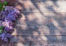 在老木背景的丁香在阳光下 库存图片