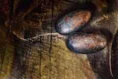 在老木背景的两粒拉丁美洲各国的人未加工的恶豆 库存图片