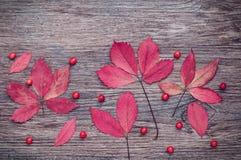 在老木背景的秋叶 免版税库存图片