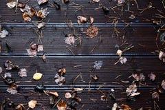 在老木背景的秋叶 库存图片