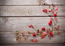 在老木背景的红色秋叶 免版税图库摄影