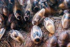 在老木背景的蟑螂 免版税库存照片
