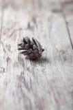 在老木背景的银色杉木锥体 库存照片