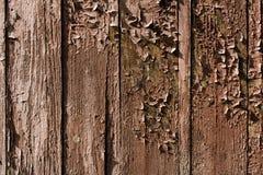 在老木背景的破裂的油漆 木纹理 免版税库存图片