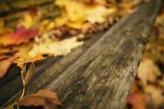 在老木长凳的下落的秋叶 库存图片