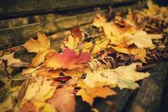 在老木长凳的下落的秋叶 库存照片