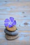 在老木头的三块禅宗石头与紫色花 免版税库存照片