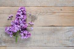在老木头的淡紫色花 库存图片